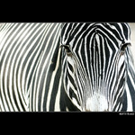 - zebra crossing -