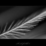 ...feather